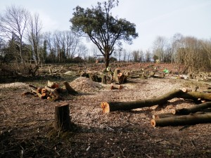 Regeneration? Trees felled to make way for a SeaChange project