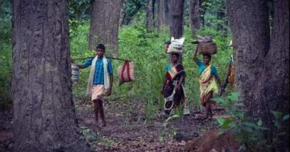 Indian forest dwellers